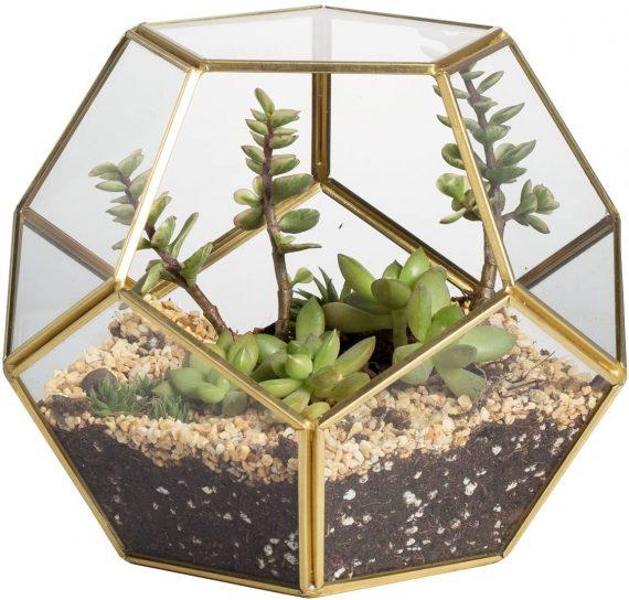 terrarium-dodecaedre