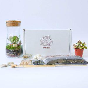 kit-complet-terrarium