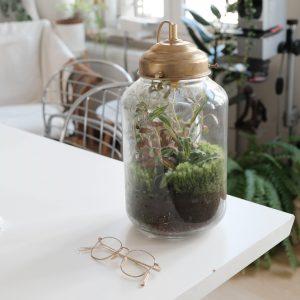 terrarium-sur-table