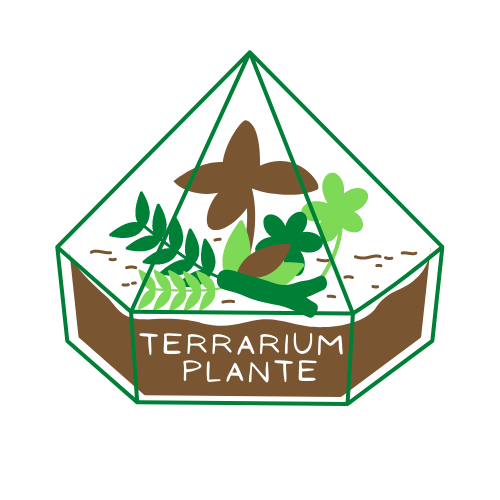 Terrarium Plante-L'univers du terrarium pour plantes d'intérieur