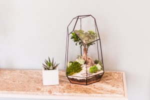 terrarium avec bonzai
