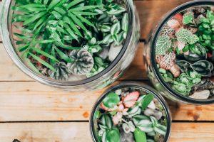 terrarium avec plantes