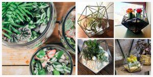 terrarium plante slider3