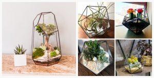 terrarium plante slider4